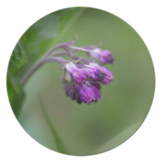 Flowers and blossoms of common comfrey dinner plate