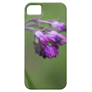 Flowers and blossoms of common comfrey iPhone SE/5/5s case
