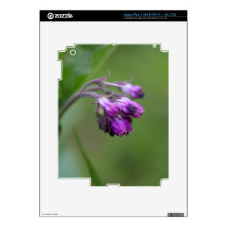 Flowers and blossoms of common comfrey skin for iPad 3