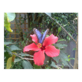 Flowers and butterflies in Franche Comte Postcard