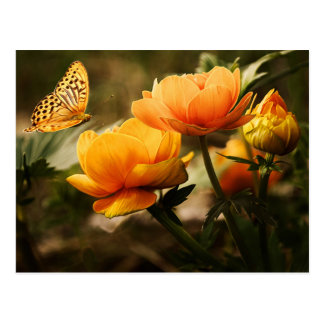 Flowers and Butterfly Postcards