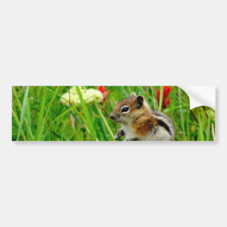 Flowers and cute cubby little Chipmunk Bumper Sticker