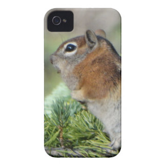 Flowers and cute little Chipmunk iPhone 4 Cases