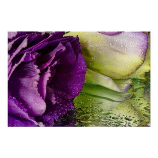 Flowers and Dew Drops Posters