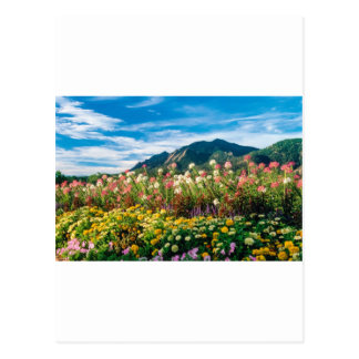 Flowers And Flatirons Postcard