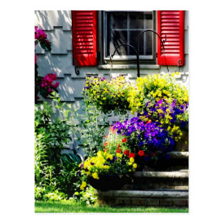 Flowers and Red Shutters Postcard