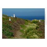 Flowers and Seagulls on Anacapa Island I Card