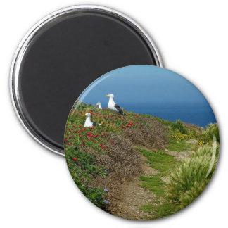 Flowers and Seagulls on Anacapa Island I Magnet