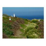 Flowers and Seagulls on Anacapa Island I Postcard