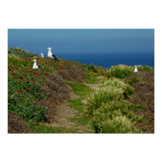 Flowers and Seagulls on Anacapa Island I Poster