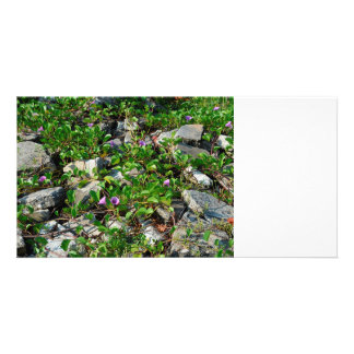 flowers and vines on river rocks florida scene photo card