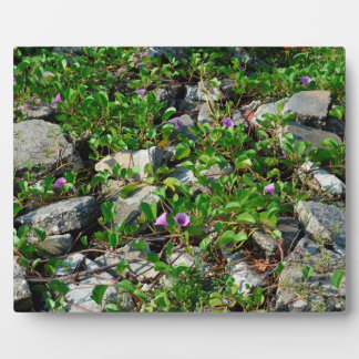 flowers and vines on river rocks florida scene photo plaque