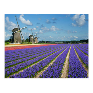 Flowers and windmills postcard