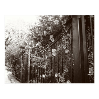 Flowers and Wrought Iron Fence, Tilt-Shift, B&W Postcard