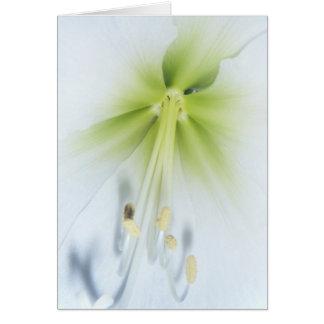 flowers art  card