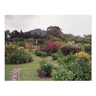 Flowers at Boquete Postcard