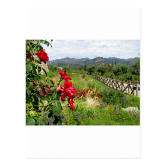 Flowers at Castello di Amorosa Postcard