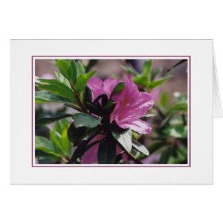 Flowers at Gibbs Farm Card