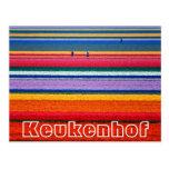 Flowers at  Keukenhof Dutch show gardens 1 Postcard