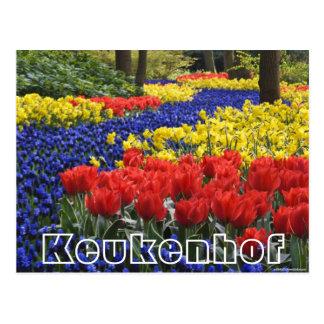 Flowers at  Keukenhof, hyacinrhs and tumips Postcard