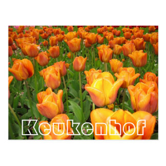 Flowers at  Keukenhof,  orange tulips Postcard