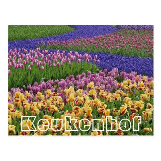 Flowers at  Keukenhof,streams of tulips Postcard
