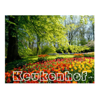 Flowers at  Keukenhof,,trees and tulips Postcard