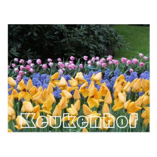 Flowers at  Keukenhof,  tulips borders Postcard