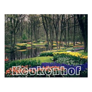 Flowers at  Keukenhof, woodland and canal Postcard