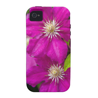 Flowers at Robinette's Apple Haus and Gift Barn 2 iPhone 4/4S Case