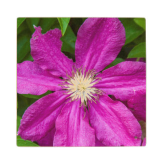 Flowers at Robinette's Apple Haus and Gift Barn Maple Wood Coaster