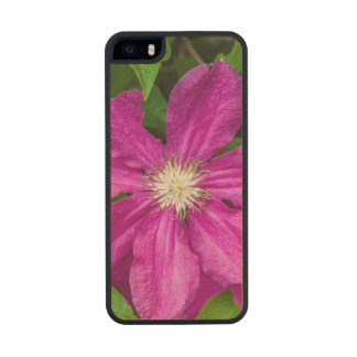 Flowers at Robinette's Apple Haus and Gift Barn Carved® Maple iPhone 5 Case