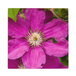 Flowers At Robinette's Apple Haus & Gift Barn Maple Wood Coaster