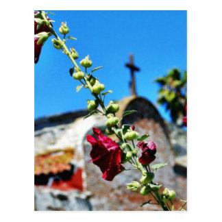 Flowers At San Juan Capistrano Postcard