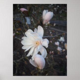 Flowers at Sunset Print