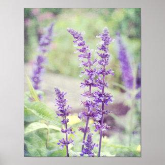 Flowers Baptisia Purple Flower Poster
