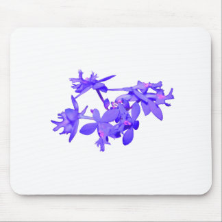 Flowers Blue Tinted Ground Orchid Mouse Pad