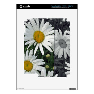 Flowers by the Lake - Daisies Skins For iPad 3