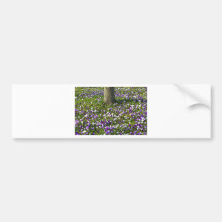 Flowers field crocuses in spring grass with tree bumper sticker