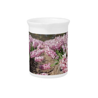 Flowers field with pink hyacinths in Holland Beverage Pitcher
