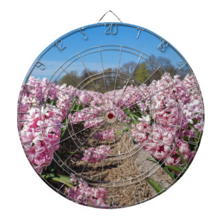 Flowers field with pink hyacinths in Holland Dartboard
