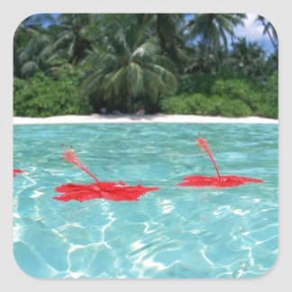 Flowers Floating in Water - Great Gift Idea Square Sticker