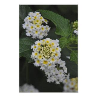 Flowers - Flores Photo Print
