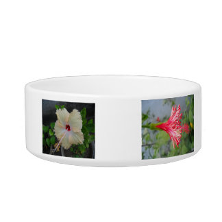 Flowers for Kitchen-Glory Cat Food Bowls