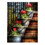 Flowers - Four Pots Postcard