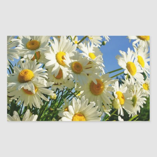 FLOWERS FRAME PRODUCTS RECTANGULAR STICKER