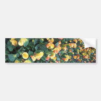 Flowers from Butterfly Garden Las Vegas USA Bumper Sticker