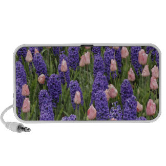 Flowers from Holland hyacinths and pink tulips Speaker