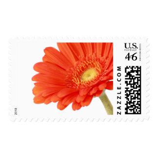 Flowers Gerbera Postage Stamp