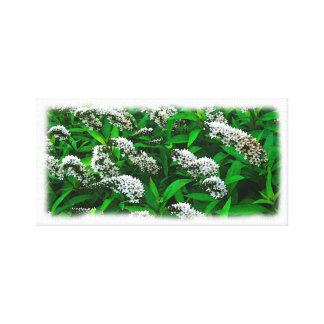 Flowers Gooseneck Strife Watercolor Canvas Print